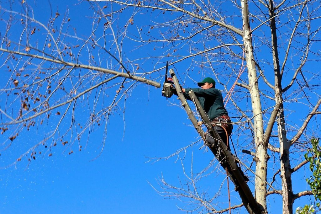 Contact Us-Country Club FL Tree Trimming and Stump Grinding Services-We Offer Tree Trimming Services, Tree Removal, Tree Pruning, Tree Cutting, Residential and Commercial Tree Trimming Services, Storm Damage, Emergency Tree Removal, Land Clearing, Tree Companies, Tree Care Service, Stump Grinding, and we're the Best Tree Trimming Company Near You Guaranteed!