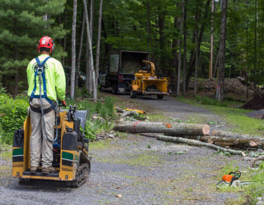 Emergency Tree Removal-Country Club FL Tree Trimming and Stump Grinding Services-We Offer Tree Trimming Services, Tree Removal, Tree Pruning, Tree Cutting, Residential and Commercial Tree Trimming Services, Storm Damage, Emergency Tree Removal, Land Clearing, Tree Companies, Tree Care Service, Stump Grinding, and we're the Best Tree Trimming Company Near You Guaranteed!