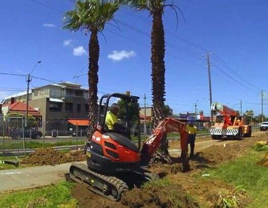 Palm Tree Removal-Country Club FL Tree Trimming and Stump Grinding Services-We Offer Tree Trimming Services, Tree Removal, Tree Pruning, Tree Cutting, Residential and Commercial Tree Trimming Services, Storm Damage, Emergency Tree Removal, Land Clearing, Tree Companies, Tree Care Service, Stump Grinding, and we're the Best Tree Trimming Company Near You Guaranteed!