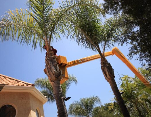 Palm Tree Trimming-Country Club FL Tree Trimming and Stump Grinding Services-We Offer Tree Trimming Services, Tree Removal, Tree Pruning, Tree Cutting, Residential and Commercial Tree Trimming Services, Storm Damage, Emergency Tree Removal, Land Clearing, Tree Companies, Tree Care Service, Stump Grinding, and we're the Best Tree Trimming Company Near You Guaranteed!