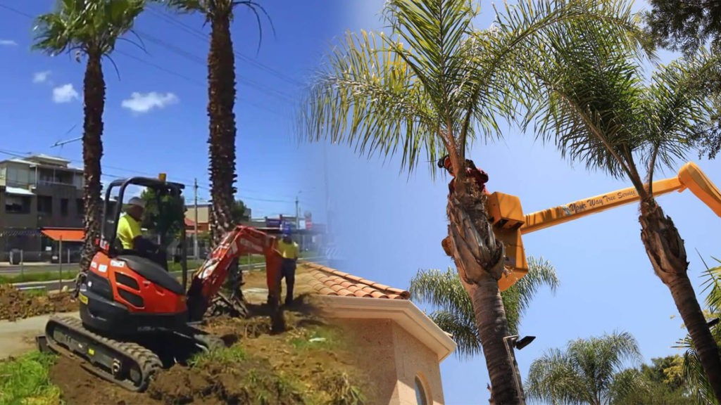 Palm tree trimming & palm tree removal-Country Club FL Tree Trimming and Stump Grinding Services-We Offer Tree Trimming Services, Tree Removal, Tree Pruning, Tree Cutting, Residential and Commercial Tree Trimming Services, Storm Damage, Emergency Tree Removal, Land Clearing, Tree Companies, Tree Care Service, Stump Grinding, and we're the Best Tree Trimming Company Near You Guaranteed!