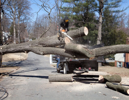 Residential Tree Services-Country Club FL Tree Trimming and Stump Grinding Services-We Offer Tree Trimming Services, Tree Removal, Tree Pruning, Tree Cutting, Residential and Commercial Tree Trimming Services, Storm Damage, Emergency Tree Removal, Land Clearing, Tree Companies, Tree Care Service, Stump Grinding, and we're the Best Tree Trimming Company Near You Guaranteed!