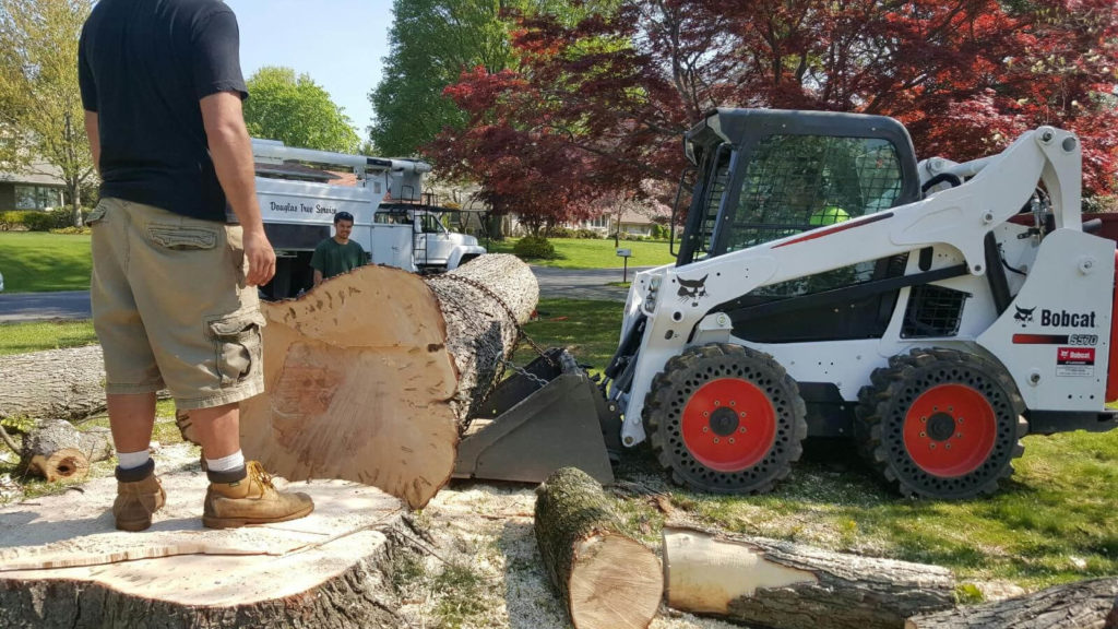 Services-Country Club FL Tree Trimming and Stump Grinding Services-We Offer Tree Trimming Services, Tree Removal, Tree Pruning, Tree Cutting, Residential and Commercial Tree Trimming Services, Storm Damage, Emergency Tree Removal, Land Clearing, Tree Companies, Tree Care Service, Stump Grinding, and we're the Best Tree Trimming Company Near You Guaranteed!
