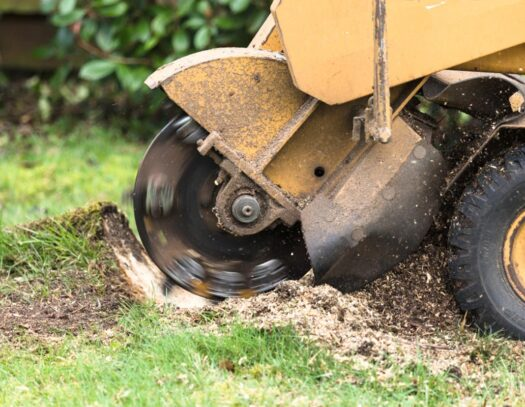 Stump Grinding-Country Club FL Tree Trimming and Stump Grinding Services-We Offer Tree Trimming Services, Tree Removal, Tree Pruning, Tree Cutting, Residential and Commercial Tree Trimming Services, Storm Damage, Emergency Tree Removal, Land Clearing, Tree Companies, Tree Care Service, Stump Grinding, and we're the Best Tree Trimming Company Near You Guaranteed!