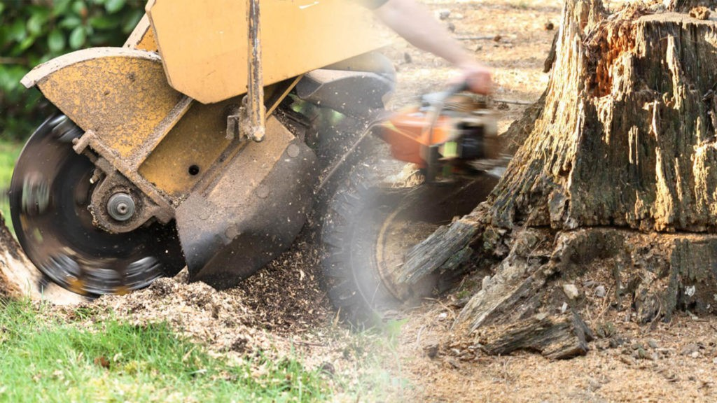 Stump grinding & removal-Country Club FL Tree Trimming and Stump Grinding Services-We Offer Tree Trimming Services, Tree Removal, Tree Pruning, Tree Cutting, Residential and Commercial Tree Trimming Services, Storm Damage, Emergency Tree Removal, Land Clearing, Tree Companies, Tree Care Service, Stump Grinding, and we're the Best Tree Trimming Company Near You Guaranteed!
