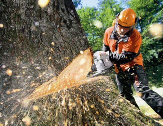 Tree Cutting-Country Club FL Tree Trimming and Stump Grinding Services-We Offer Tree Trimming Services, Tree Removal, Tree Pruning, Tree Cutting, Residential and Commercial Tree Trimming Services, Storm Damage, Emergency Tree Removal, Land Clearing, Tree Companies, Tree Care Service, Stump Grinding, and we're the Best Tree Trimming Company Near You Guaranteed!