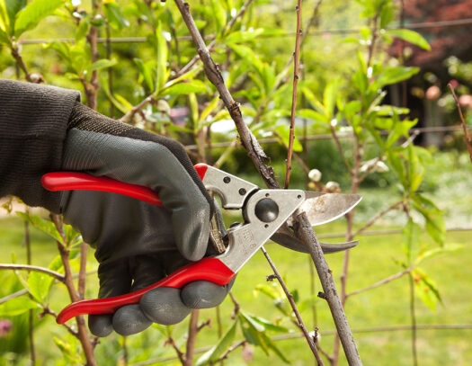 Tree Pruning-Country Club FL Tree Trimming and Stump Grinding Services-We Offer Tree Trimming Services, Tree Removal, Tree Pruning, Tree Cutting, Residential and Commercial Tree Trimming Services, Storm Damage, Emergency Tree Removal, Land Clearing, Tree Companies, Tree Care Service, Stump Grinding, and we're the Best Tree Trimming Company Near You Guaranteed!