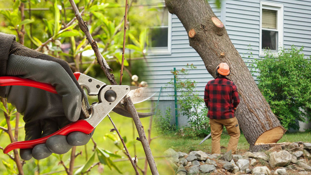 Tree pruning & tree removal-Country Club FL Tree Trimming and Stump Grinding Services-We Offer Tree Trimming Services, Tree Removal, Tree Pruning, Tree Cutting, Residential and Commercial Tree Trimming Services, Storm Damage, Emergency Tree Removal, Land Clearing, Tree Companies, Tree Care Service, Stump Grinding, and we're the Best Tree Trimming Company Near You Guaranteed!